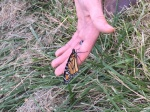 Butterfly climbs onto my hand